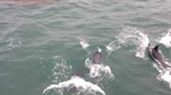 Vissers krijgen gezelschap op zee